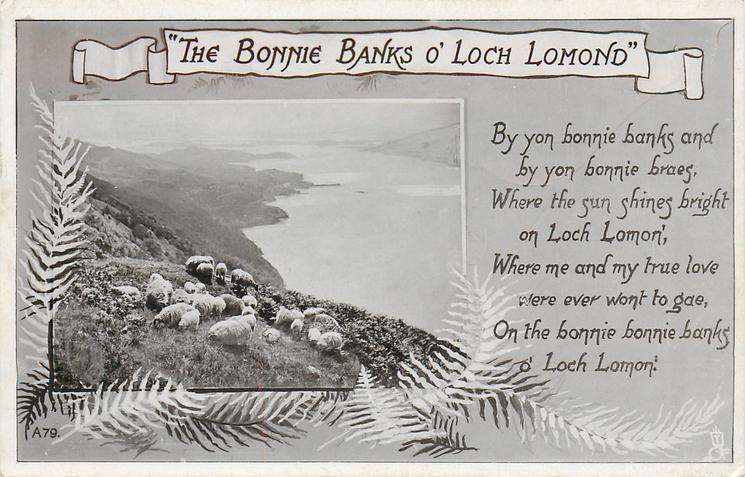 """""""THE BONNIE BANKS O' LOCH LOMOND""""  sheep"""