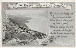 """THE BONNIE BANKS O' LOCH LOMOND""  sheep"