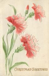 three red/white carnations & bud, green stems & leaves