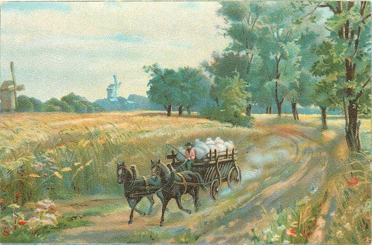 man driving two horse cart on dirt road, passing wheat field , distant windmills