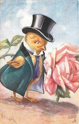 chick with top hat formal coat & tie looks at large rose blossom