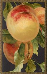 two large peaches, part of a third is also visible