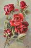 red roses, three open facing forwards & down, one faces back,, three buds