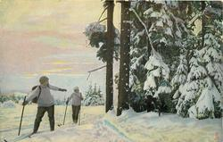 winter snow scene, path between large tree trunks to left, snow covered evergreens to right