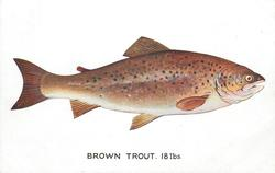 BROWN TROUT. 18 LBS.