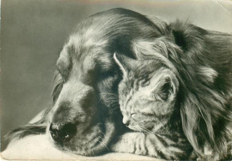 dog & kitten snuggle-up