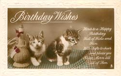 BIRTHDAY WISHES two kittens on stool next to straw coloured wine flagon