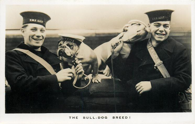 THE BULL-DOG BREED! H.M.S. AJAX  on cap-band, 2 bull-dogs & handlers