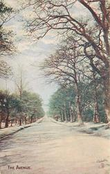 THE AVENUE  road between trees