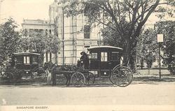 SINGAPORE GHARRY