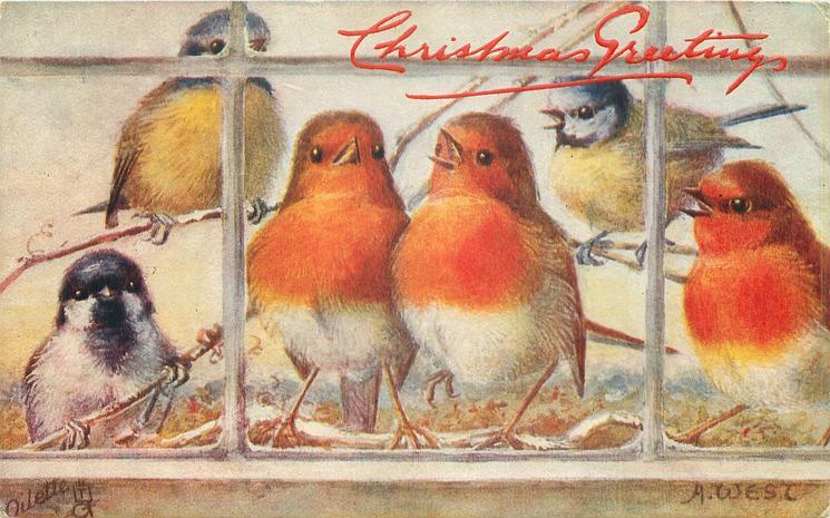 3 robins, 2 tits & a sparrow behind window
