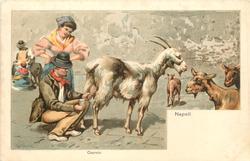 CAPRAIO  man milks goat