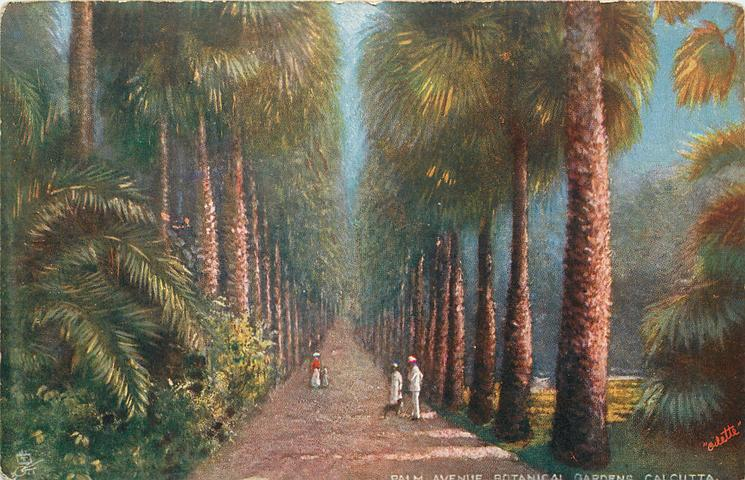 PALM AVENUE, BOTANICAL GARDENS