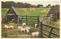 """""""FARM SCENE"""" ON MR LLOYD GEORGE'S FARM"""