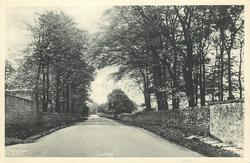 DARLEY  wall right & left, trees both sides of road