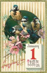 four tits perched in wild-rose bush below JANUARY 1 calendar page insc. MAY STILL THY LIFE FROM DAY TO-DAY HARMONIOUS FLOW