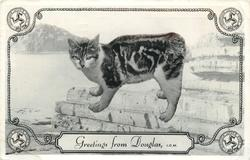 GREETINGS FROM DOUGLAS, I.O.M.  manx cat superimposed on view of sea-wall