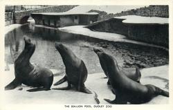 THE SEA-LION POOL