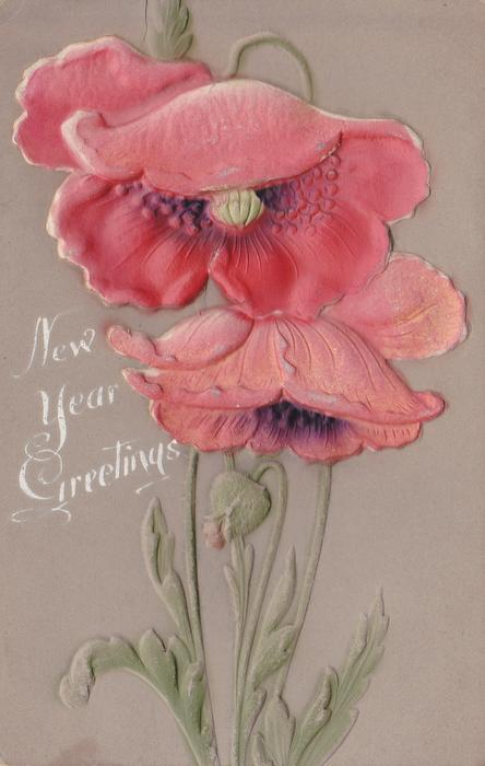 NEW YEAR GREETINGS  two red poppies