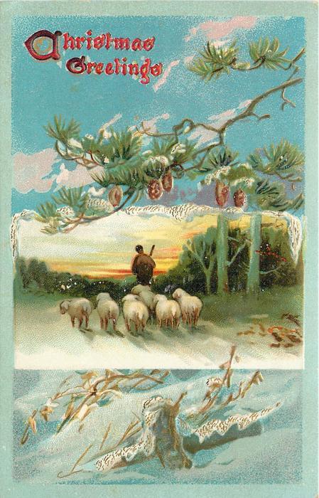 CHRISTMAS GREETINGS  inset six sheep walk away following shepherd, evergreen branch above