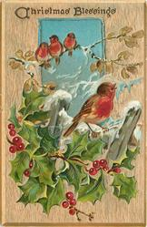 CHRISTMAS BLESSINGS oblong inset 3 red breasted robins sit on branch above, another with holly below