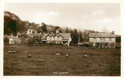 FAR SAWREY  sheep in field in front of 2 large houses