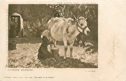 THE WHITE COW  LA VACHE BLANCHE