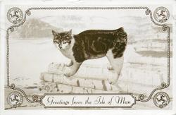 GREETINGS FROM THE ISLE OF MAN  manx cat