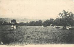 A PRETTY VIEW AT LLANGORSE  cows