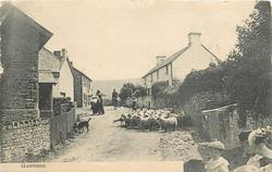 LLANGORSE  village, sheep in street