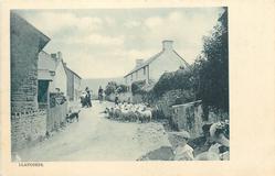 LLANGORSE  village street, sheep in road