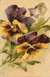 two purple & yellow pansies, one bud at top, stalks to lower left