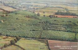 BULMER'S CIDER APPLE ORCHARDS VIEWED FROM THE AIR