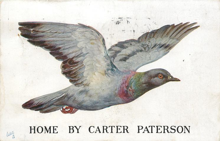 HOME BY CARTER PATERSON carrier pigeon flies right