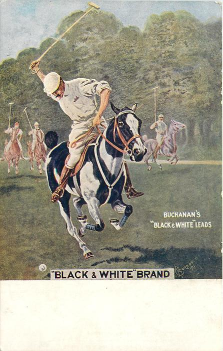 """BLACK & WHITE"" BRAND polo or ""BLACK & WHITE"" SCOTCH"