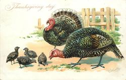 two large turkeys, one male and one female, look left at four chicks, fence behind turkeys