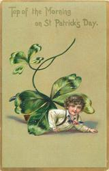TOP OF THE MORNING ON ST. PATRICK'S DAY  boyl under exaggerated four leaf clover (no pig)