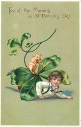 TOP OF THE MORNING ON ST. PATRICK'S DAY  boy under exaggerated 4 leaved clovers  with pig