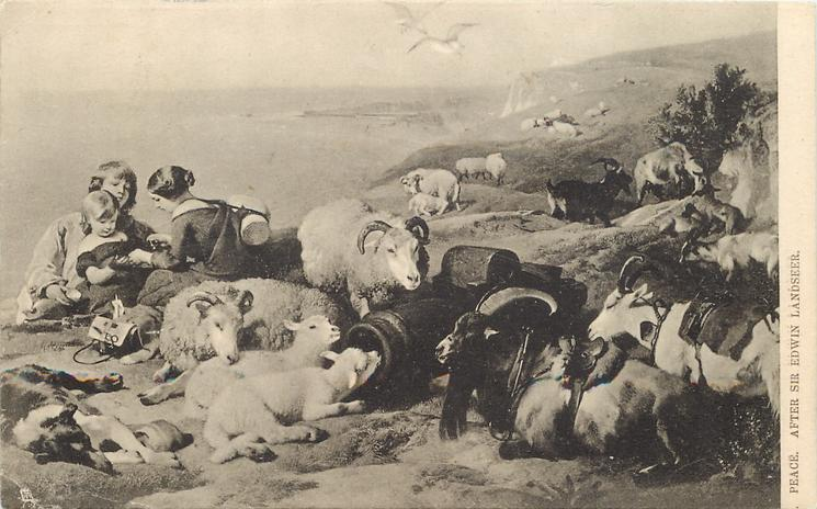 PEACE  girls, collie, sheep & goats