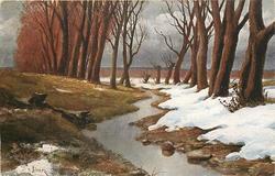 melting snow, trees, stream
