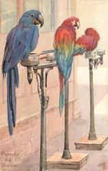 PARROTS & MACAW