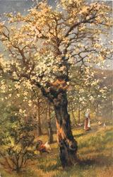 old tree with yellow blossom, woman feeds chickens right