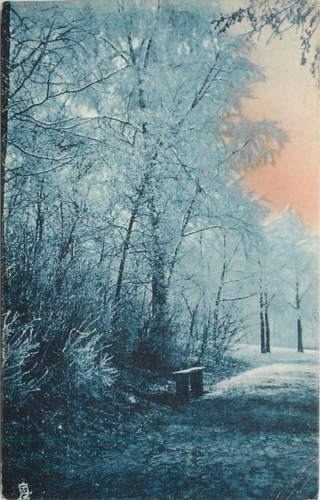 path, right, lined with snow covered trees, left, bench
