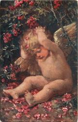 w/o greeting opt., cherub with both hands behind head sits under rhododendron bush, many red flowers around