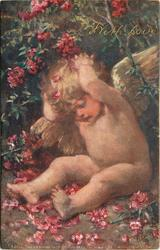 WITH LOVE (gilt), cherub with both hands behind head sits under rhododendron bush, many red flowers around