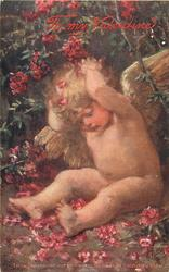 TO MY VALENTINE (in red, single line) cherub with both hands behind head sits under rhododendron bush, many red flowers around