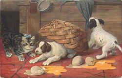 PANCAKES  puppy & kitten look at three broken eggs, another puppy pull at a cloth