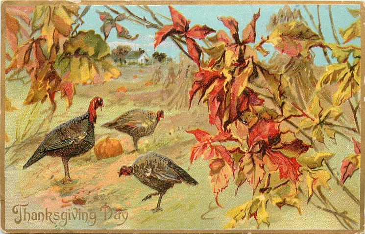 three turkeys in field, pumpkin between them, house in background