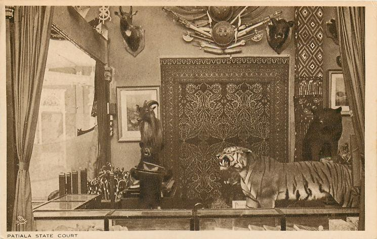 PATIALA STATE COURT  corner view of stand with tiger on right facing left behind showcases