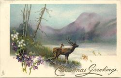 purple and white heather left, inset of stag & doe in front of loch & mountains